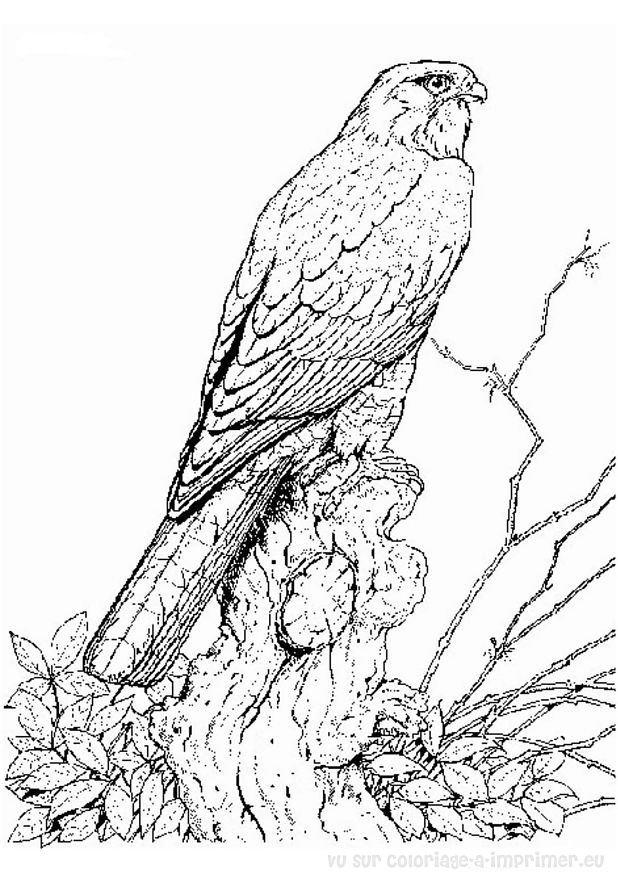 Coloriage de oiseau imprimer et colorier