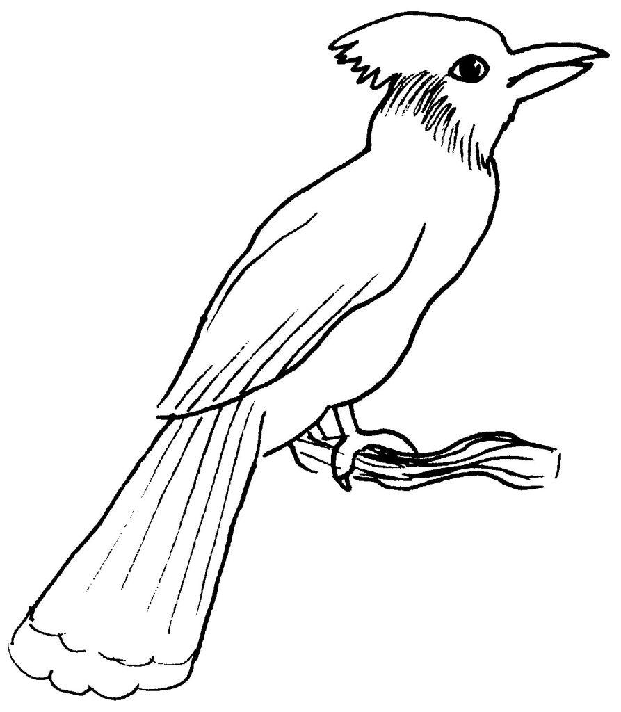 Coloriage de oiseau gratuit a imprimer et colorier