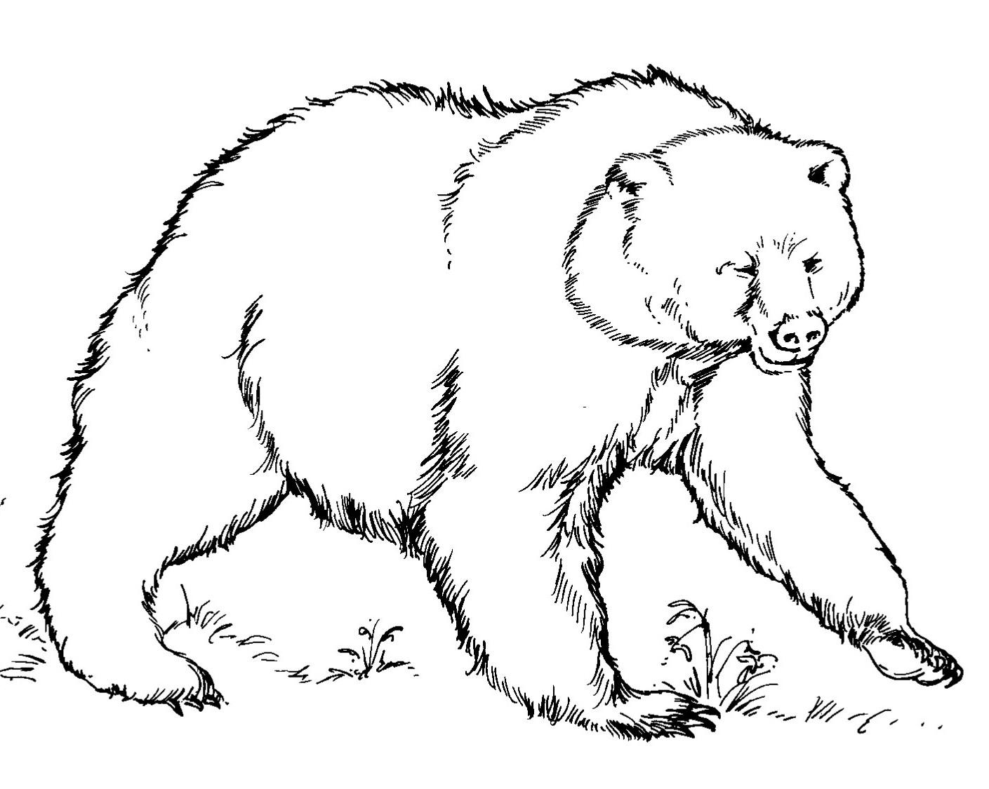 Sélection de coloriage ours à imprimer sur LaGuerche.com ...