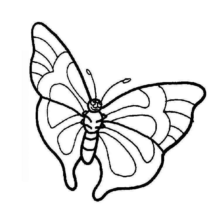Activité de coloriage papillon