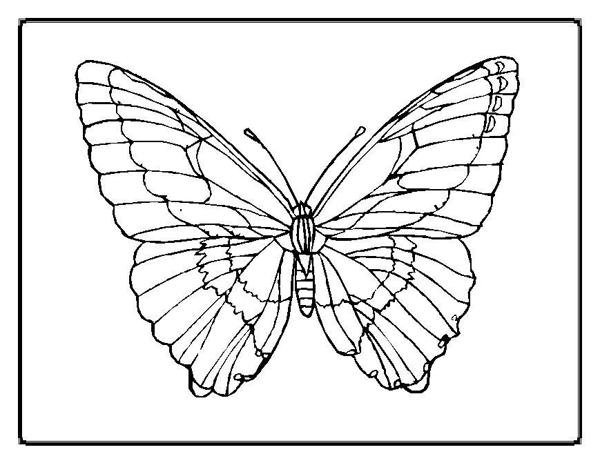 papillon dessins colorier papillon - Papillon Dessin