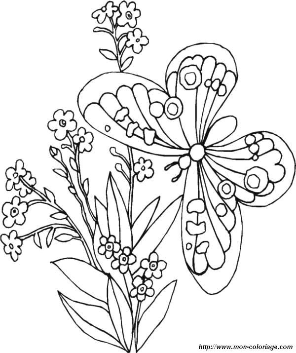 image de papillon a dessiner