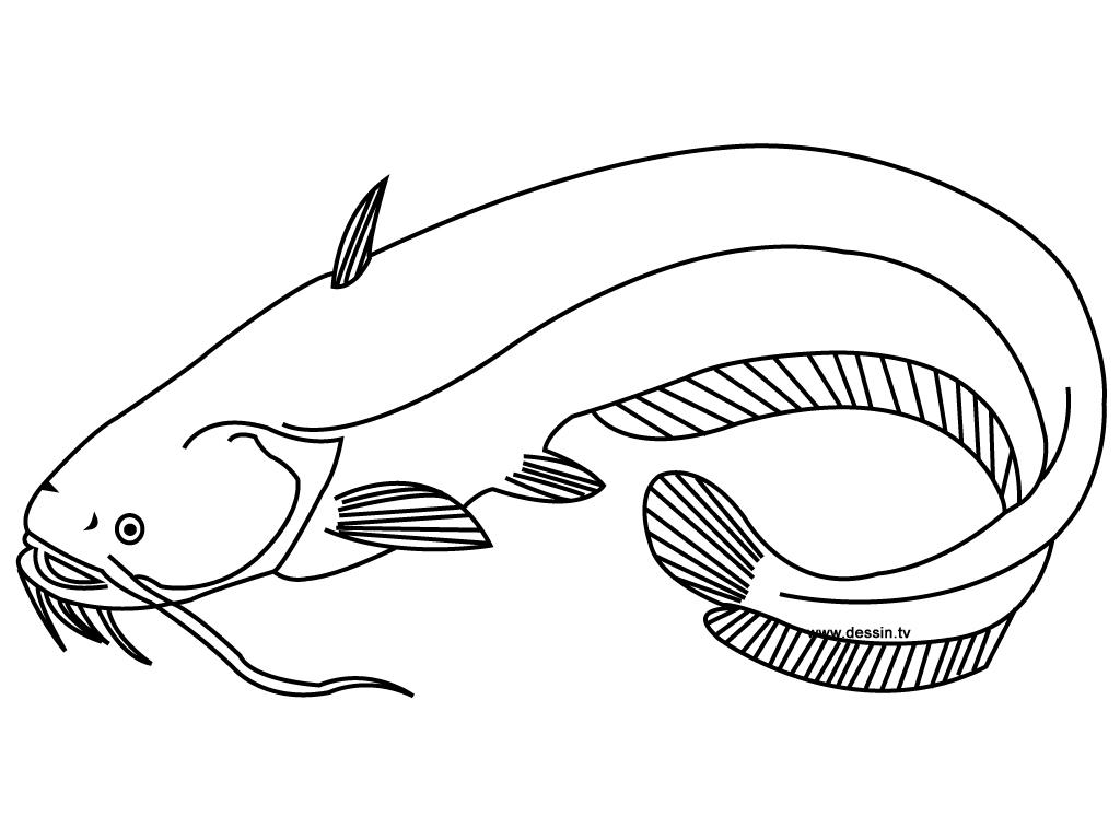 Vector Drawing Lines Opengl : Dessins de coloriage poisson à imprimer sur laguerche