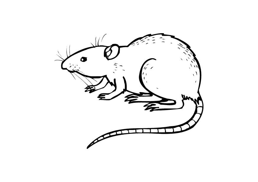 S 233 Lection De Coloriage Rat 224 Imprimer Sur Laguerche Com