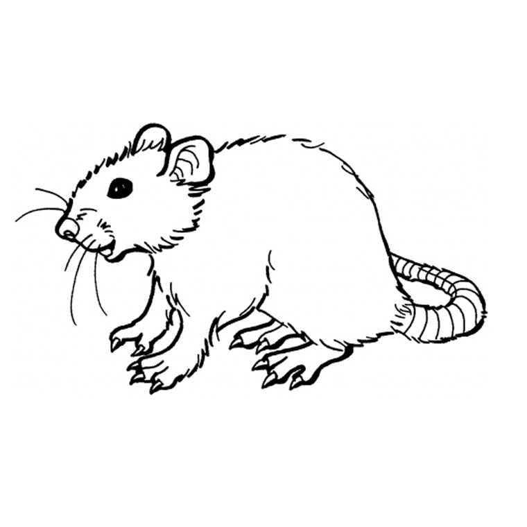 Dessin #13658 - coloriage de rat a colorier
