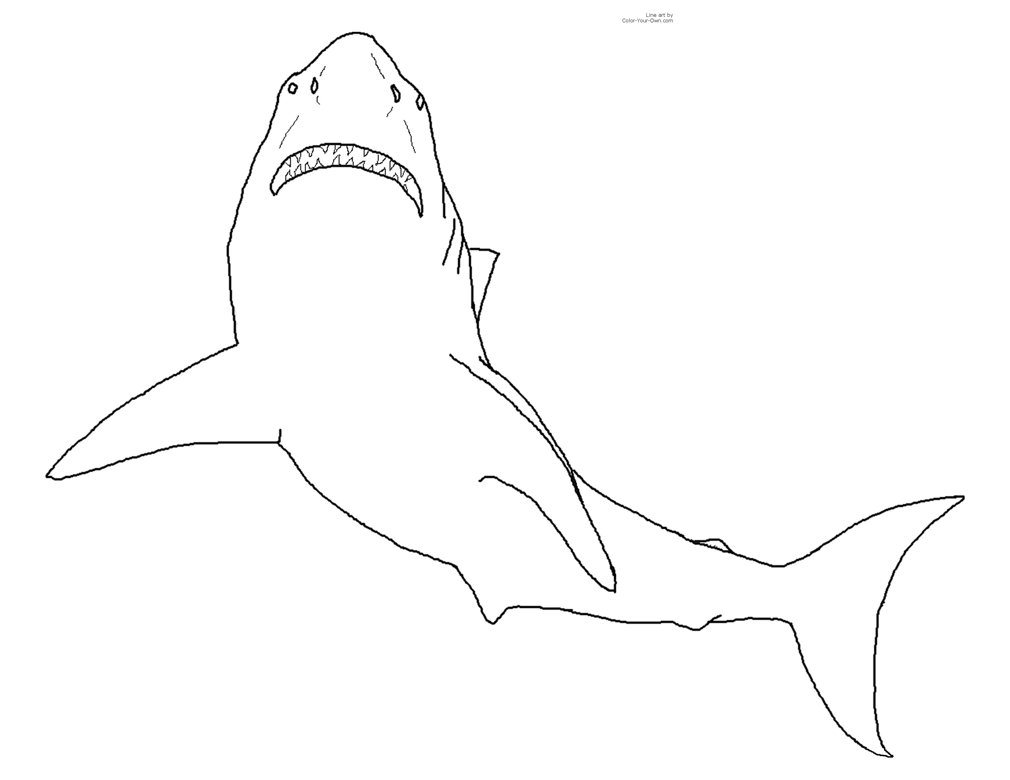 Selection De Coloriage Requin A Imprimer Sur Laguerche Com Page 1