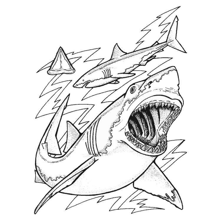 S lection de coloriage requin imprimer sur page 4 - Coloriage de requin ...