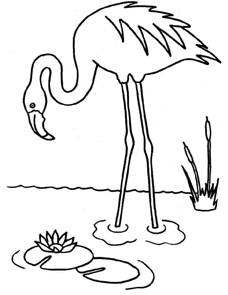 coloriageflamand rose
