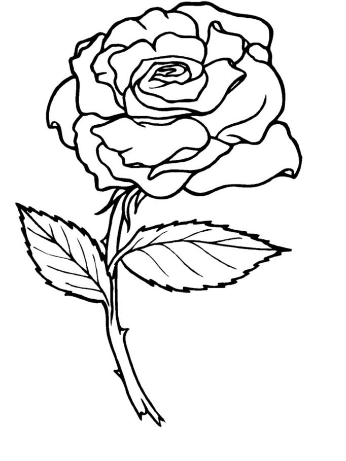 rose dessins colorier coloriage lab - Dessin De Rose A Imprimer