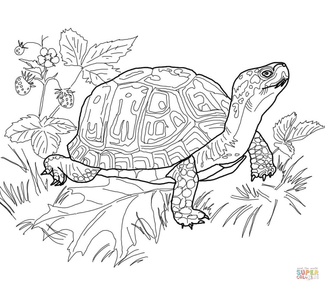 Line Drawing Of Water Animals : Dessins de coloriage tortue à imprimer sur laguerche