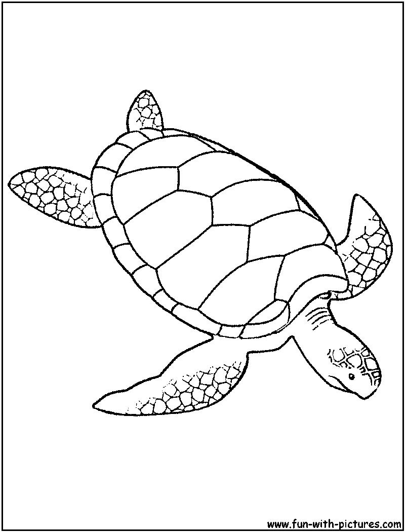 69 dessins de coloriage tortue à imprimer sur LaGuerche ...
