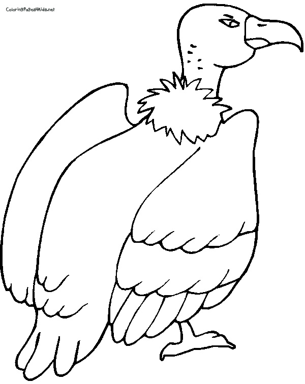 Peacock Coloring Page 2 also Harley Quinn Coloring Pages moreover The Lion King Coloring Pages further Africa Coloring Pages For Kids together with Free Sports Themed Coloring Pages. on turkey coloring pages printable
