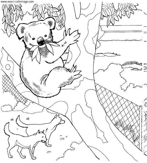 dessin 13945 coloriage de zoo gratuit imprimer