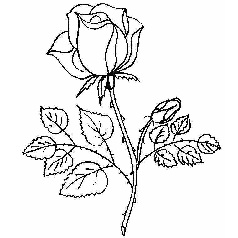 63 dessins de coloriage rose et coeur imprimer sur page 1 - Roses dessins ...