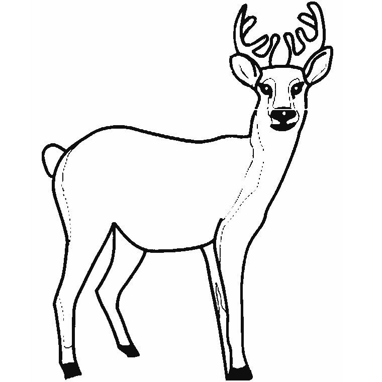 S lection de coloriage chevreuil imprimer sur page 1 - Coloriage de cerf ...