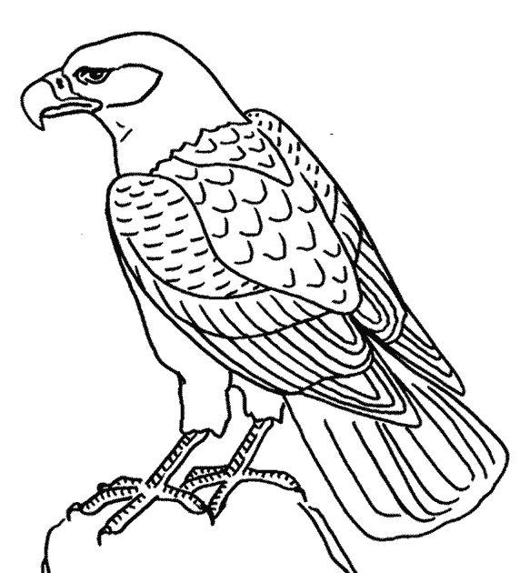 S lection de coloriage faucon imprimer sur - Dessiner un faucon ...