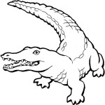 coloriage-crocodile-1229873862.jpg