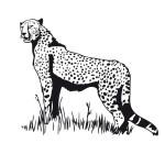 coloriage-guepard.jpg